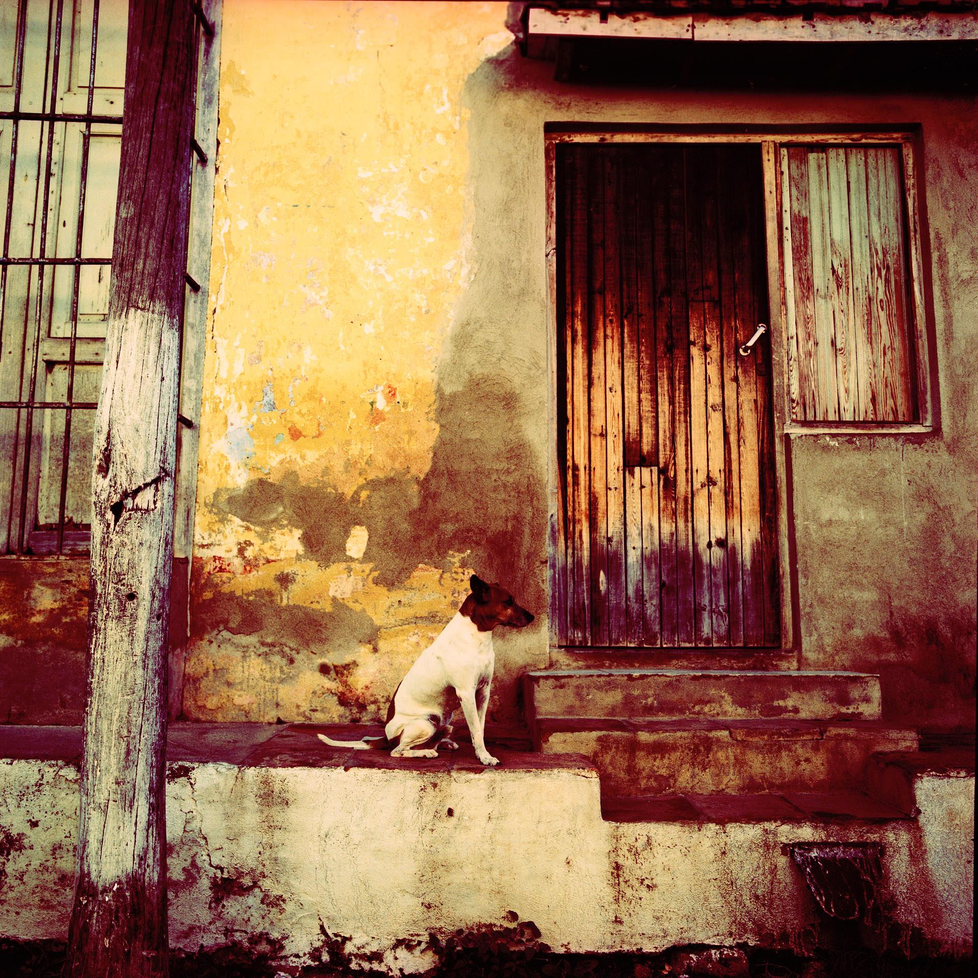 6.Trinidad dog
